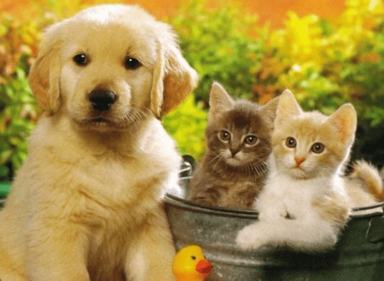 платить налоги за животных
